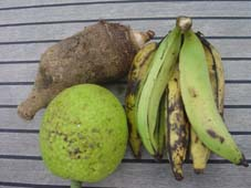 Dasheen, plantin en breadfruit